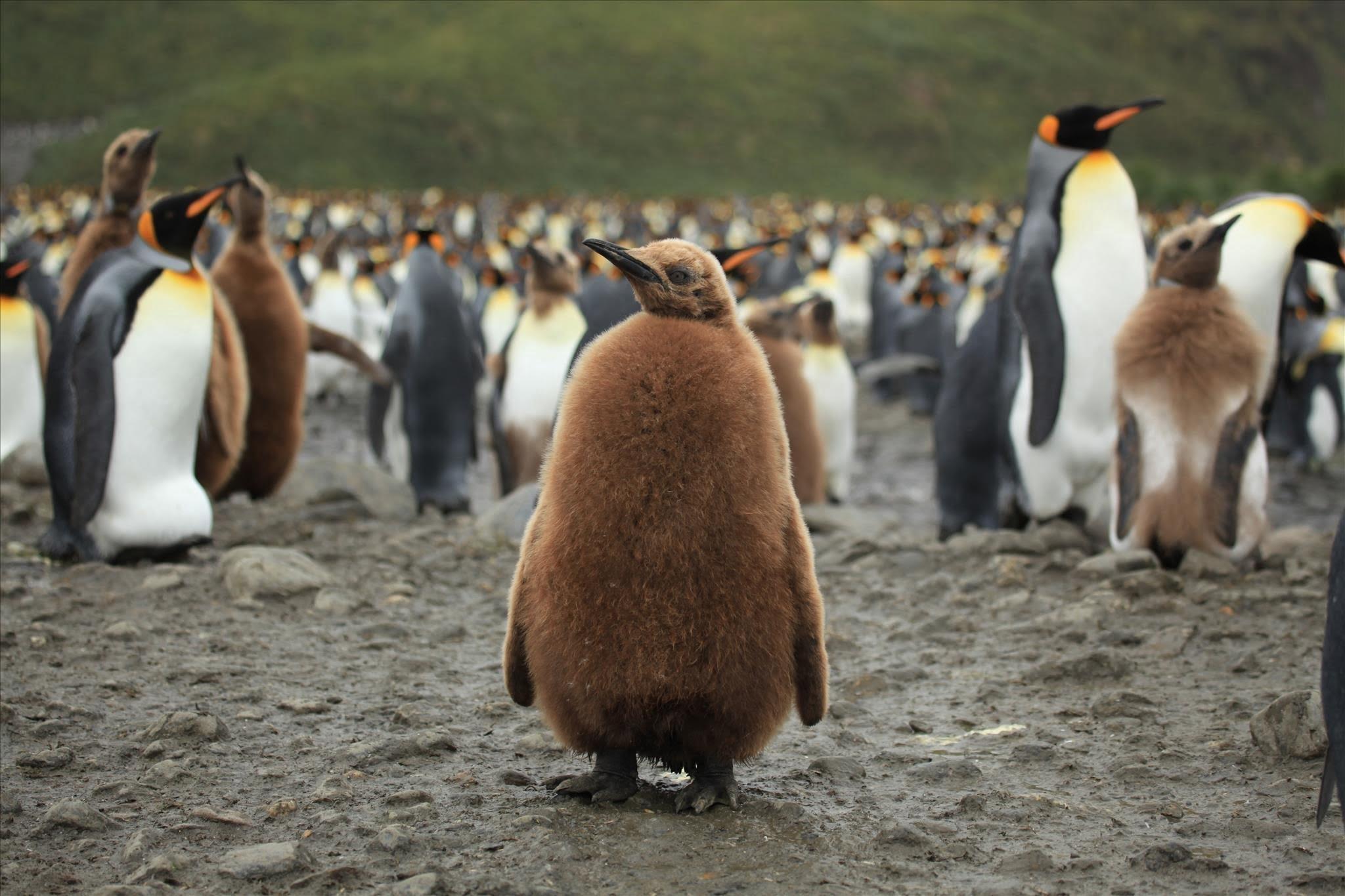 Основы Linux.Часть 9 (Управление переменными среды)