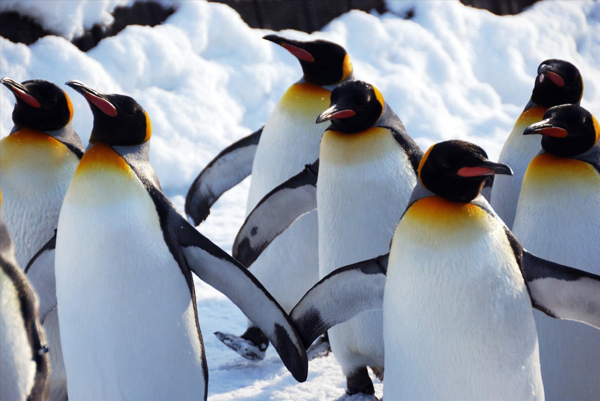 Основы Linux .Часть 12 (Загружаемые модули ядра)